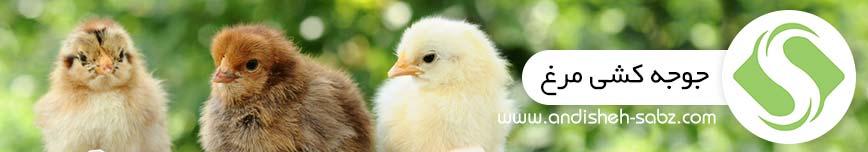جوجه کشی از مرغ