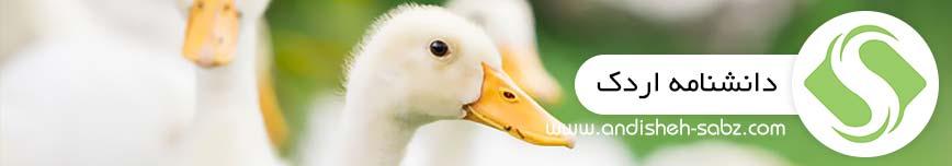 دانشنامه اردک