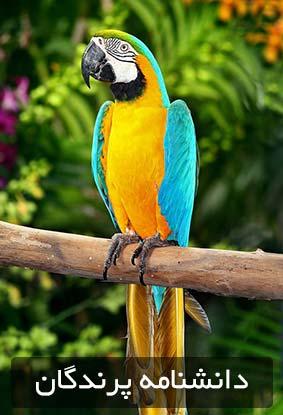 دانشنامه پرندگان