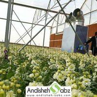 بخاری گلخانه ای و مرغداری - فروشگاه اینترنتی اندیشه سبز