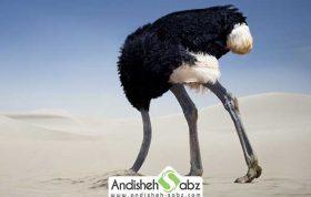 بیماری آنفولانزای در شترمرغ ها