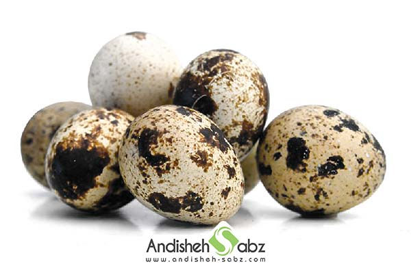 پارامترهای لازم برای جوجه کشی از تخم بلدرچین