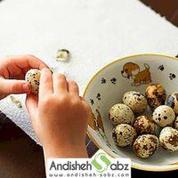 گوشت و تخم بلدرچین برای کودکان - اندیشه سبز