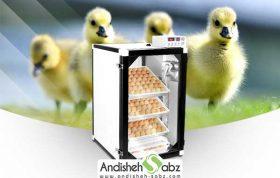 خرید دستگاه جوجه کشی اردک