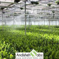 آبیاری با سیستم مه پاش - فروشگاه اینترنتی اندیشه سبز