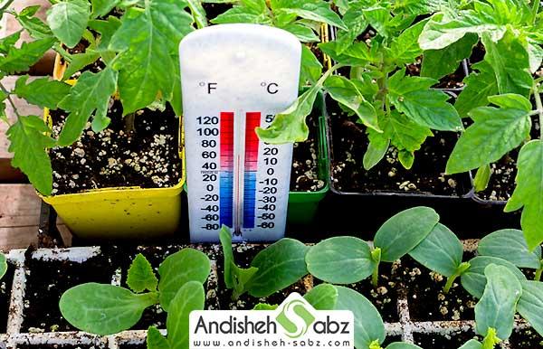 دمای مورد نیاز در گلخانه خیار