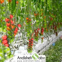 گرمای مورد نیاز گلخانه گوجه فرنگی