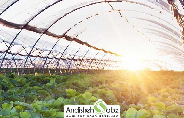 منعکس کردن نور خورشید در داخل گلخانه