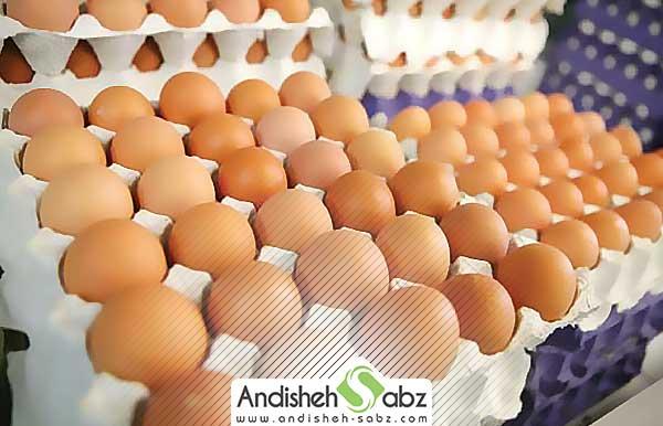 نگه داری و انبار تخم نطفه دار قبل از جوجه کشی
