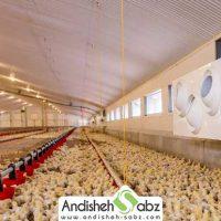 گرم کردن مرغداری با روش های مقرون به صرفه و ارزان - سایت اندیشه سبز