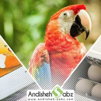 مراحل جوجه کشی از پرندگان زینتی - فروشگاه اینترنتی اندیشه سبز