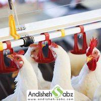 ضرورت استفاده از آب با کیفیت و تمیز در مرغداری - اندیشه سبز