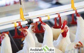 اهمیت کیفیت آب مصرفی طیور در مرغداری ها