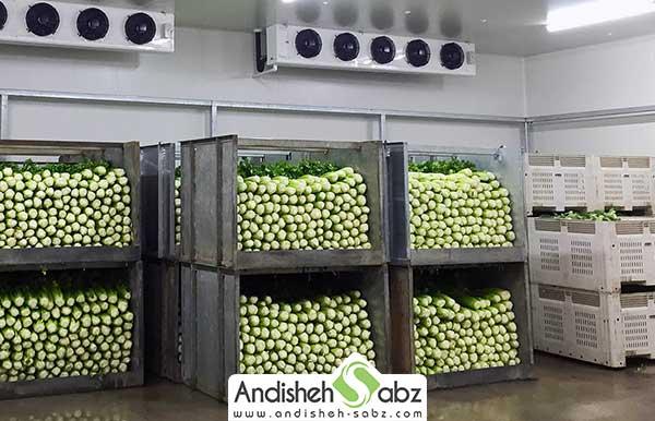 نگه داری میوه و سبزی در سردخانه بالای صفر