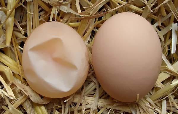 تخم مرغ هایی با ترک های مویی شکل - اندیشه سبز