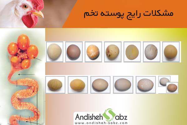 مشکلات رایج مربوط به پوسته تخم مرغ و راهکار پیشگیری از آنها