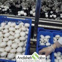 تجهیزات لازم برای پرورش قارچ - اندیشه سبز