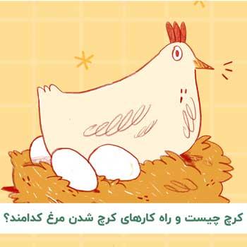 چگونه مرغ را کرچ کنیم؟
