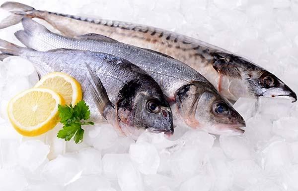 صنعت شیلات و فروشگاه های عرضه محصولات دریایی