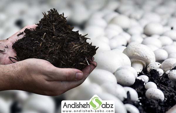 کمپوست قارچ چیست و چگونه تهیه میشود - فروشگاه اینترنتی اندیشه سبز