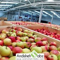 آشنایی با انواع سردخانه های سیب صنعتی و کارگاهی
