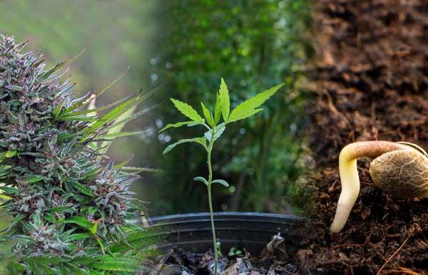اهمیت تهویه در گلخانه های باز و بسته