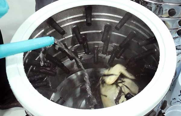 ریختن آب بر روی مرغ