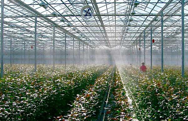 عوارض افزایش بیش از حد رطوبت در گلخانه کدامند