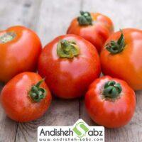 نحوه کشت گوجه فرنگی در گلخانه
