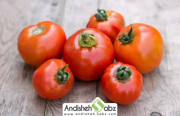 اموزش کشت گوجه فرنگی گلخانه ای - اندیشه سبز