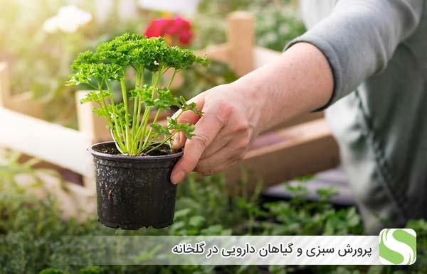 پرورش سبزی و گیاهان دارویی در گلخانه - اندیشه سبز