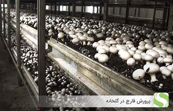 پرورش قارچ در گلخانه - اندیشه سبز