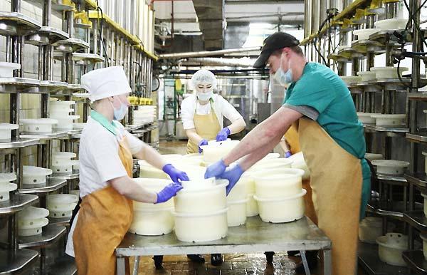 تولید ماست از شیر - اندیشه سبز
