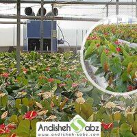 سیستم گرمایش مناسب گلخانه - اندیشه سبز