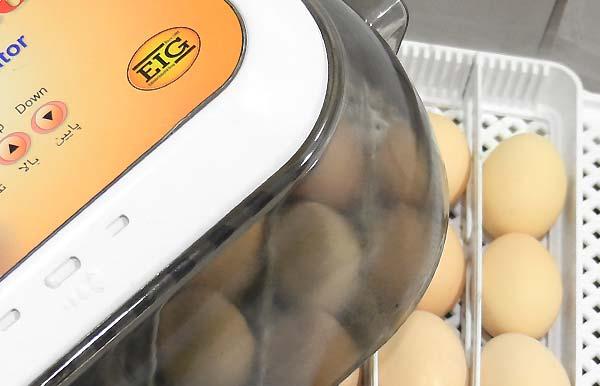 قطعی برق چه مشکلاتی را برای دستگاه جوجه کشی و تخم های نطفه دار - فروشگاه اینترنتی اندیشه سبز