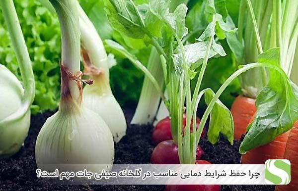 چرا حفظ شرایط دمایی مناسب در گلخانه صیفی جات مهم است؟ - اندیشه سبز