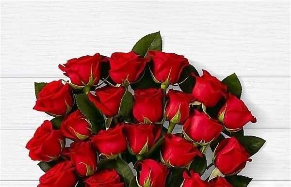 گل رز - اندیشه سبز