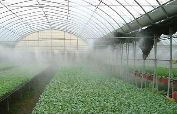 اهمیت رطوبت در گلخانه - فروشگاه اینترنتی اندیشه سبز
