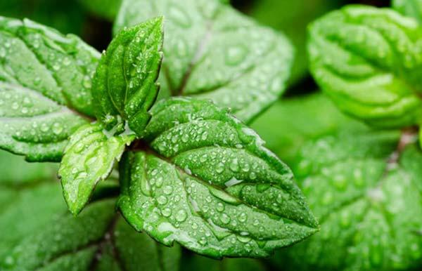 راهکارهای کاهش رطوبت در گلخانه