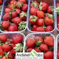 شرایط و دمای نگهداری توت فرنگی در سردخانه