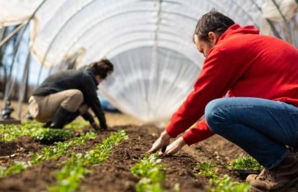 چه محصولاتی می توان در گلخانه کاشت
