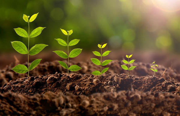 تأثیر نور بر فتوسنتز گیاهان - اندیشه سبز