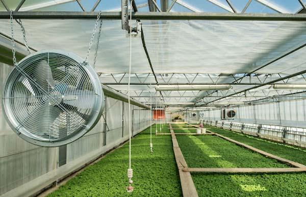 تهویه منظم هوای گلخانه - اندیشه سبز