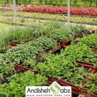 راه اندازی گلخانه گیاهان داروئی - اندیشه سبز