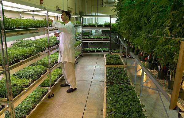 مزایای کشت گلخانه ای گیاهان داروئی نسبت به کشت طبیعی - اندیشه سبز