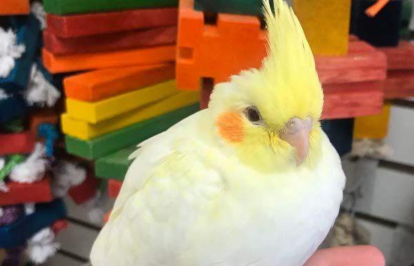 ابتدا پرنده باید به محیط جدید عادت کند - اندیشه سبز