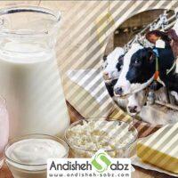 بررسی فواید و خطرات شیر - اندیشه سبز