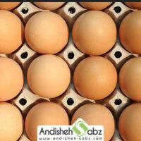 شرایط نگهداری و انبار کردن تخم نطفه دار - اندیشه سبز