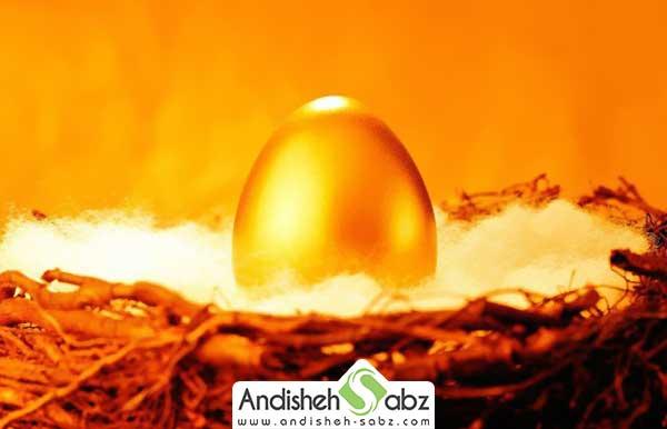 از کجا تخم نطفه دار تهیه کنیم - اندیشه سبز