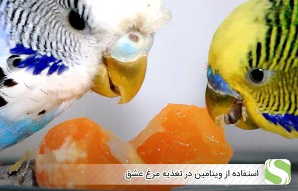 استفاده از ویتامین در تغذیه مرغ عشق - اندیشه سبز